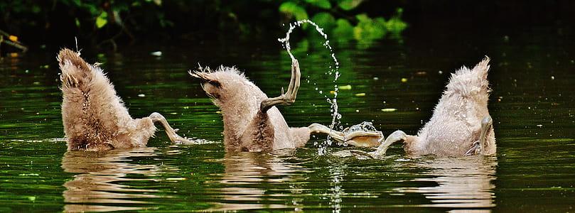 three gray ducks on body of water during daytime