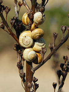 snails attached on plant