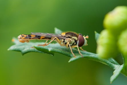 yellow and brown dragonfly on green leaf photography