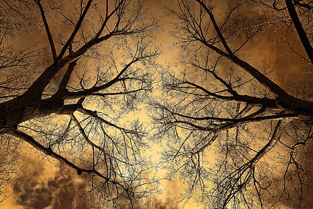 two trees under nimbus sky