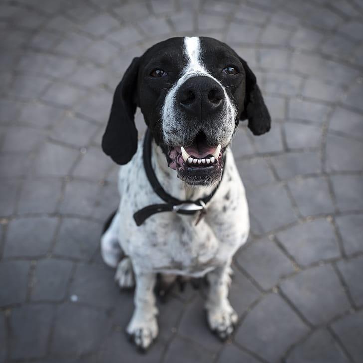 Black and White Short Coat Dog Closeup Photography