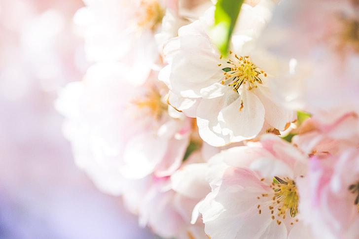 Wonderful Spring Blooms #2