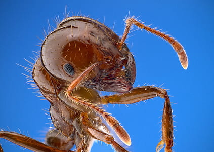 worm eye photograph of fire ant