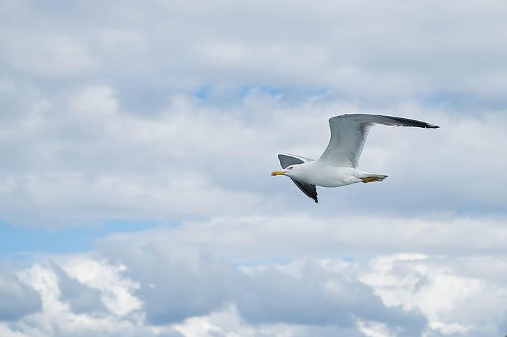 flying white seagull
