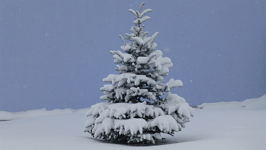 pine tree covered with white snow during daytime