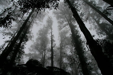 low-angle grayscale photography of forest