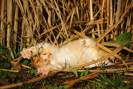orange tabby cat playing on grass field
