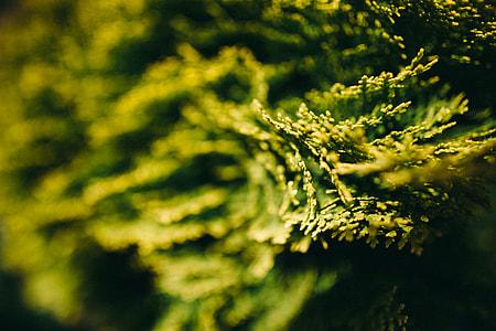 Closeup view of nature