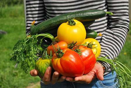 person holding tomatoes and cucumbers