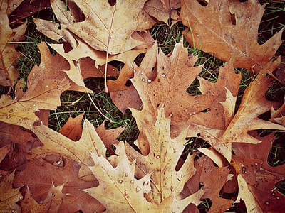 pile of withered leaves on green grass