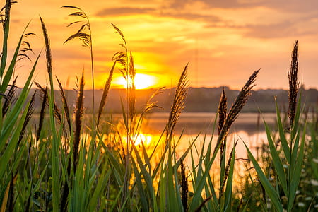 grass beside the lake during sunset