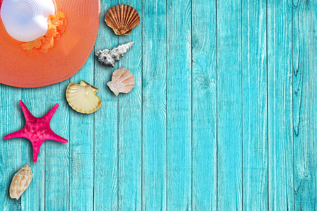 assorted-color seashells and purple starfish on top of blue planks