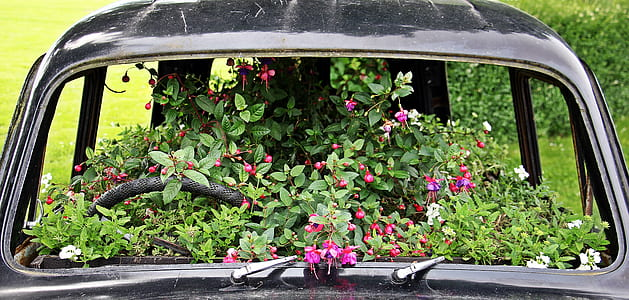 photo of black car filled of flowers