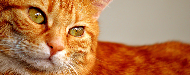 shallow focus photography orange cat