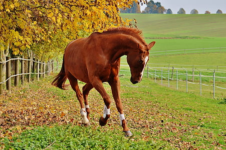 brown horse on grass during daytime