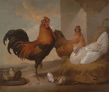 three assorted chicken illustration