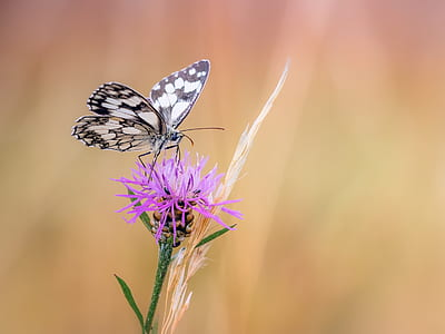 white and gray butterfly perched on purple petaled flower closeup photography