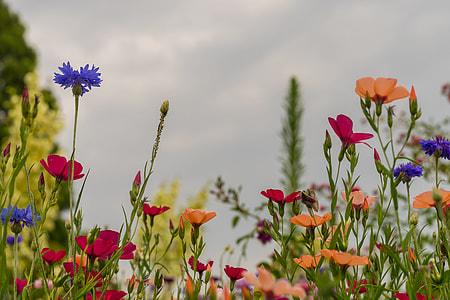 assorted-color flower plants