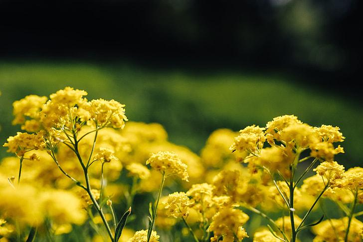 Royalty free photo small yellow flowers pickpik small yellow flowers mightylinksfo