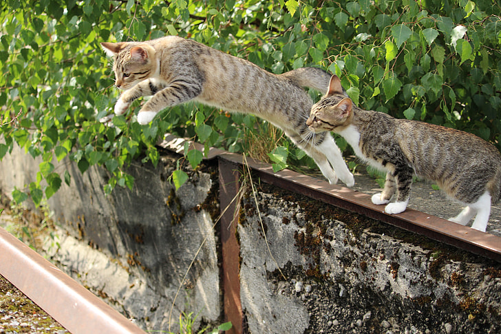 photo of grey tabby cat while jumping