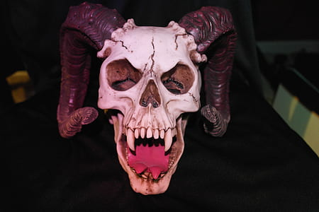 white and black skull with horns
