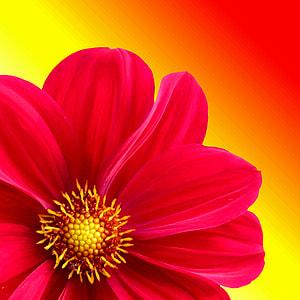 red flower illustration