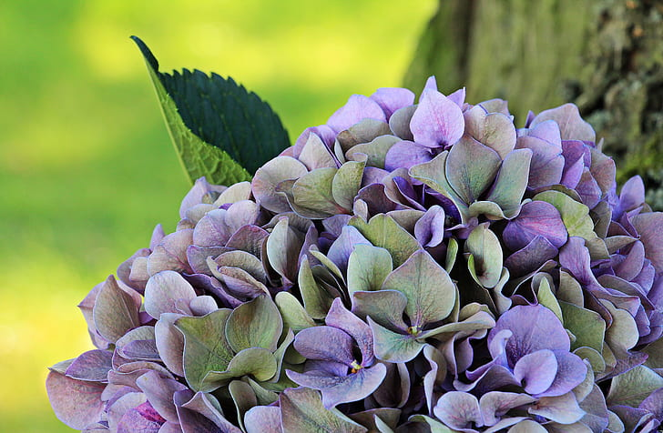 purple and grey petaled flowers