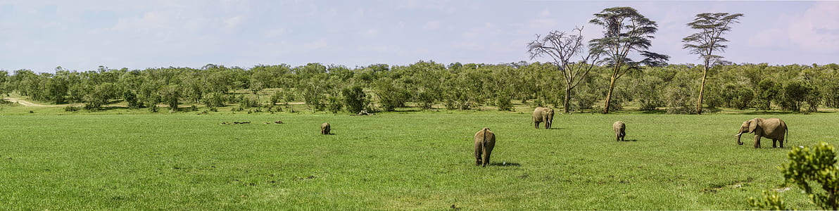 Elephant eating grass on field at daytime