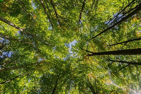 wormeye view trees photography
