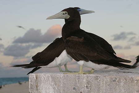 close-up photography of brown booby birds