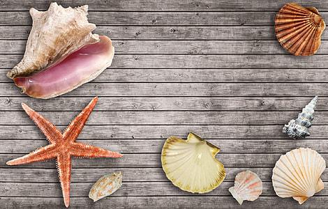 assorted seashells graphics wallpaper