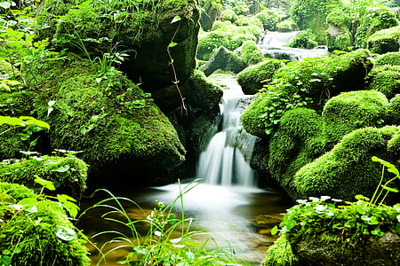 photography of waterfalls and forest