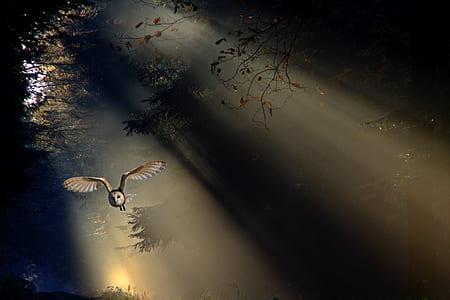 brown owl flying