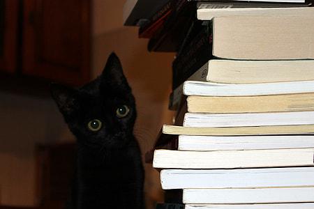 black cat beside pile of book