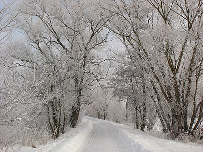snow forest near road