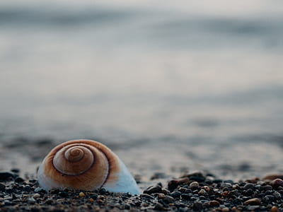 focus photo of shell on rocks
