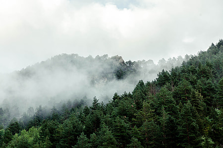 forest trees under white clouds during daytime