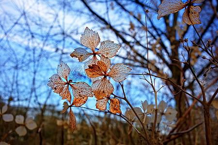 closeup photo of brown leaf tree