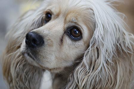 close-up photo of long-coated white dog