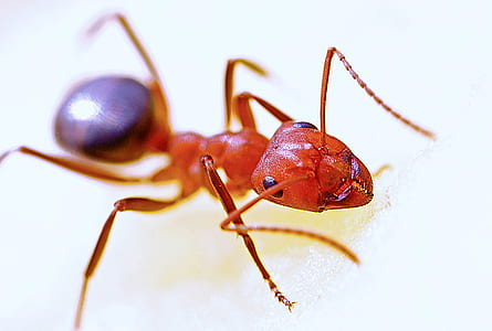 fire ant in close-up photography