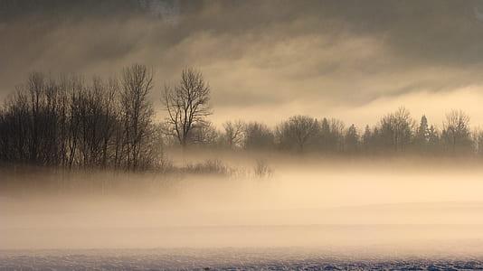 photo of gray trees