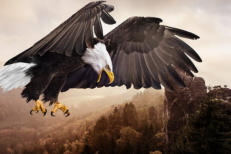 bald eagle digital wallpaper