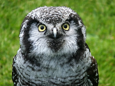selective focus photography of gray owl