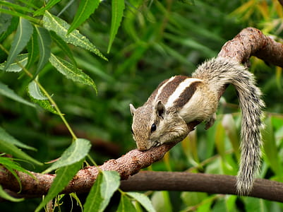 photo of four-legged brown mammal on tree branch