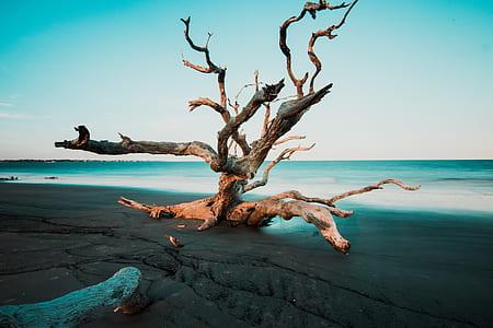 brown drifted wood on seashore