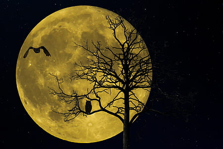silhouette of moon and trees at nighttime