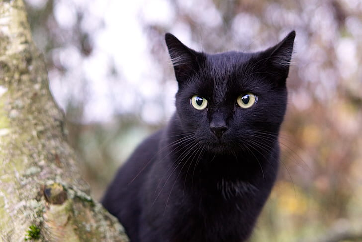 close up photography of black cat