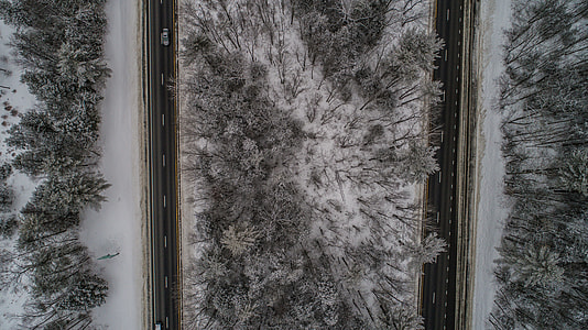 aerial photograph of a road and pine trees