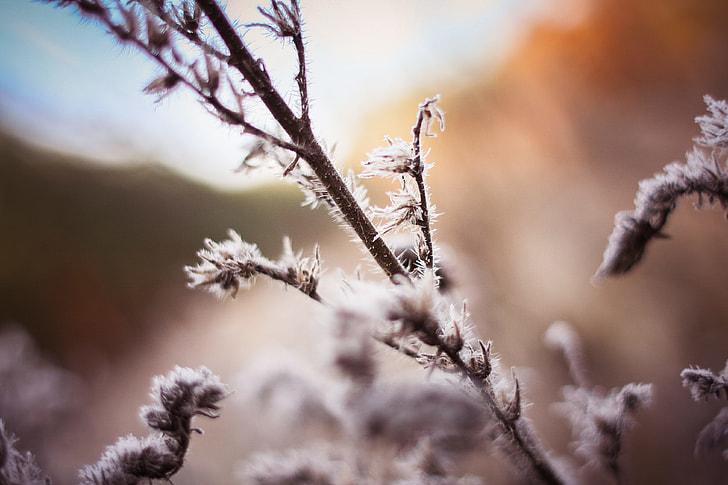 Morning Hoarfrost on a Bush