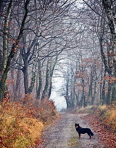 black and tan dog standing in the middle of the road surround with leafless tress